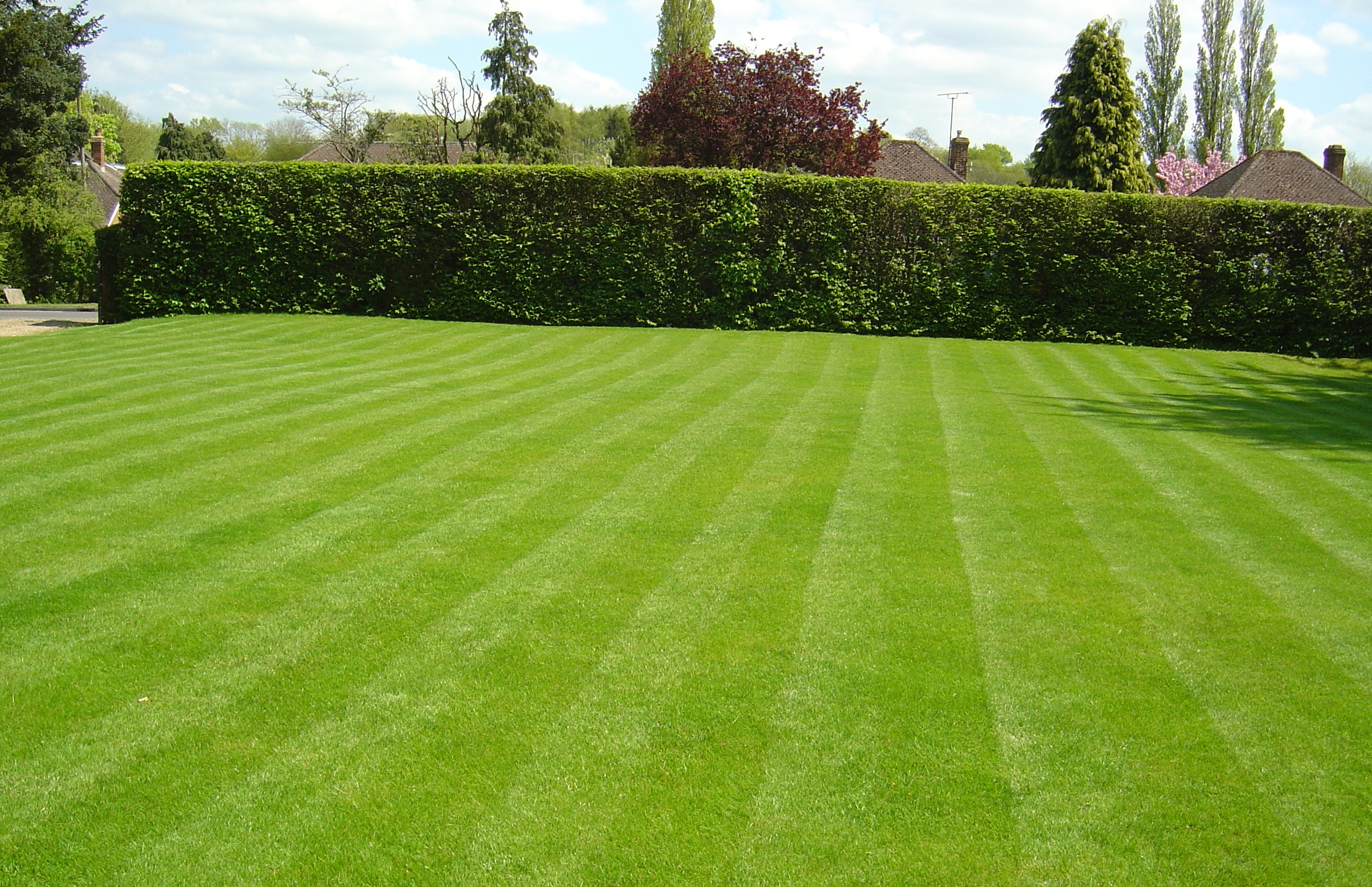 Warrington lawn care