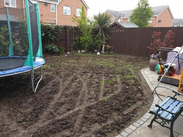 Leatherjacket lawn damage Warrington
