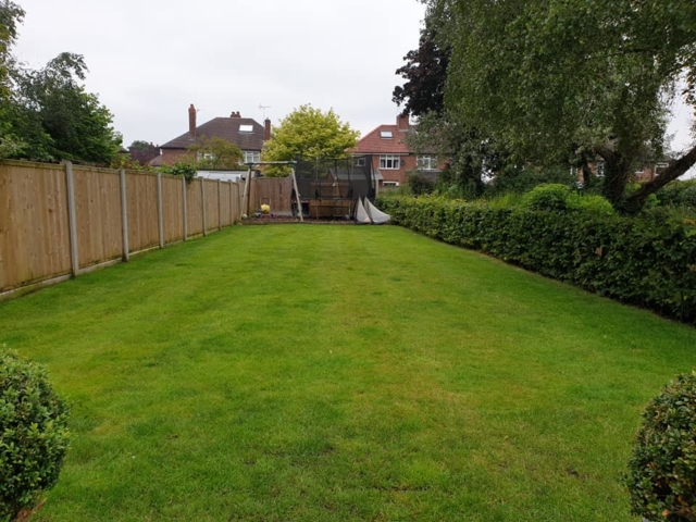 Scarifying, over seeding, top dressing lawn