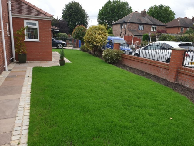 Lawn Renovation Warrington. Scarified, aerated, over seeded and top dressed.