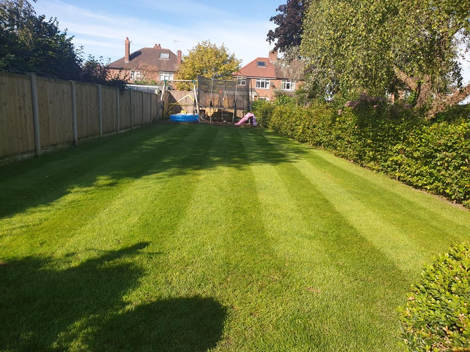Scarified and seeded lawn in Northwich