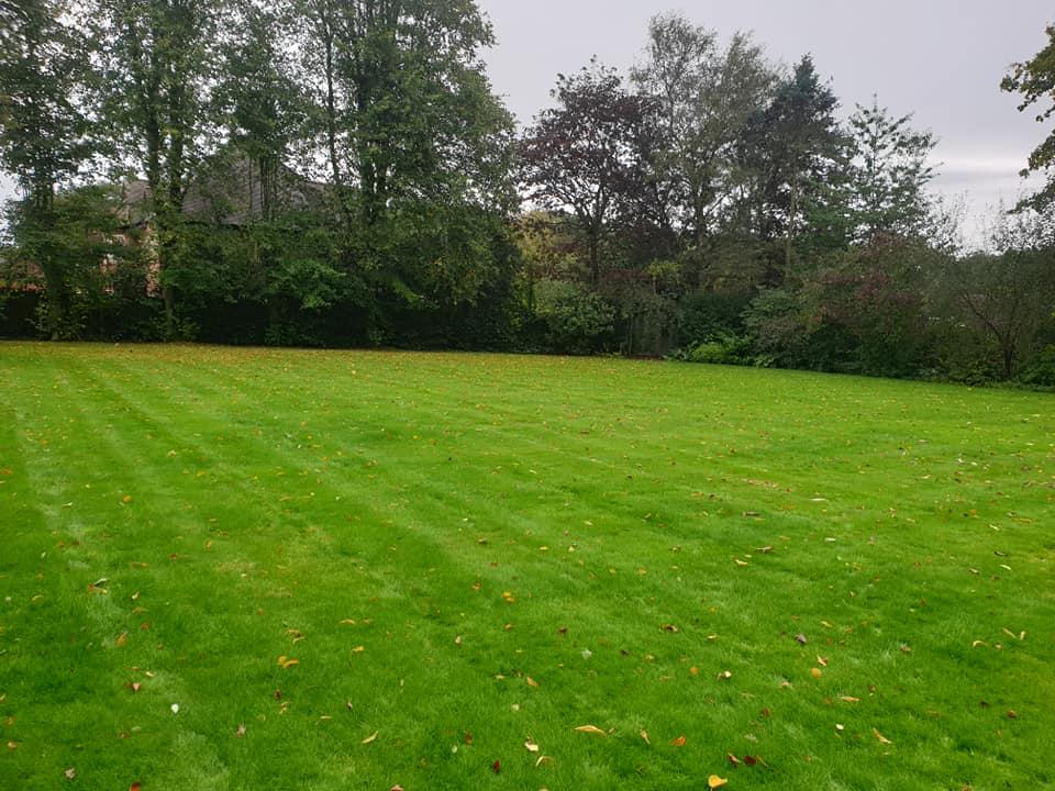 Lawn renovation Appleton